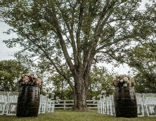 Area in front of large tree with green leaves set up for a wedding ceremony