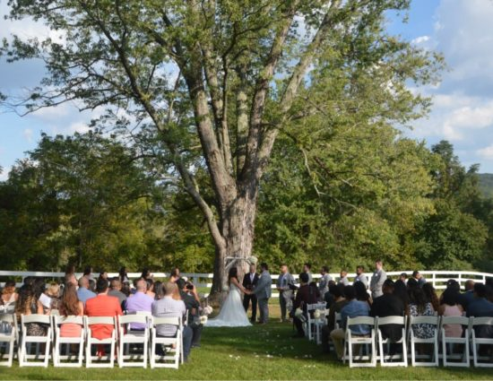 Wedding ceremony set up in front of large tree with green leaves with bride in white dress and groom in gray suit