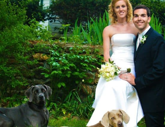 Bride with white dress and groom with black suit standing together with black dog and light gray dog
