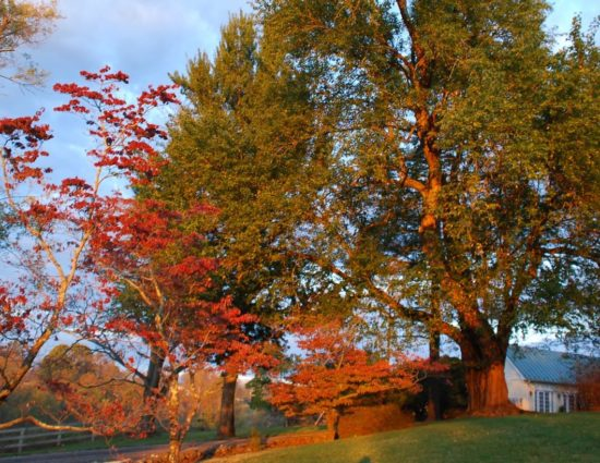 Large trees with green, red, and orange leaves next to the events center building