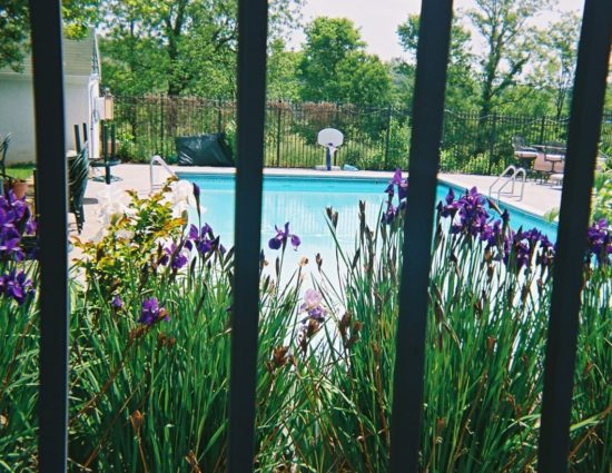 View of the pool on other side of rod iron fence surrounded by purple flowers