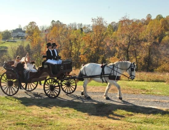 Bride and maid of honor riding in old buggy pulled by white horse