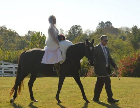 Bride in white dress sitting on dark brown horse being led with man in gray suit