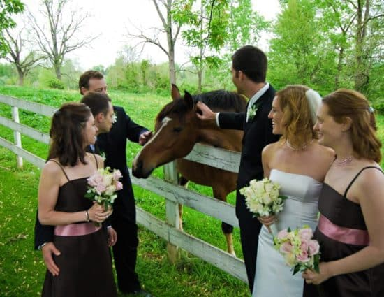 Wedding party standing near white fence petting brown horse