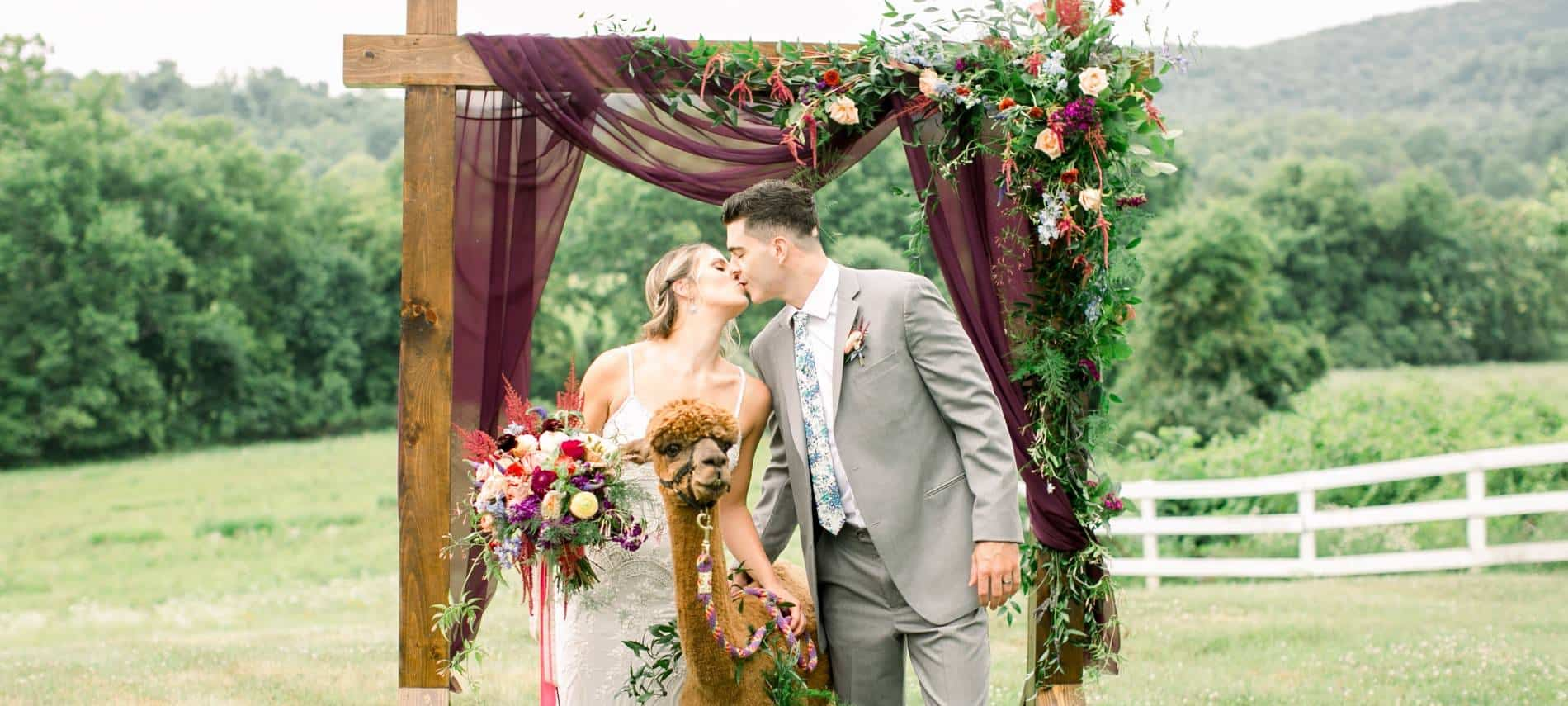 Bride with white wedding dress and groom with gray suit standing near a brown alpaca under a wooden alter decorated with flowers on a hill with green trees in the background